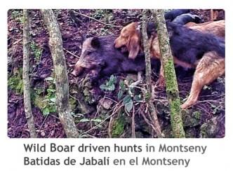 ReivaxFilms_Batidas de Jabali en el Montseny